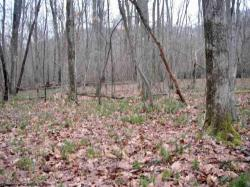 Lot 16 Sandy Creek Acres