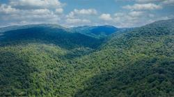 365.3 acres Briery Mountain Old Albright/terra Alta Pike